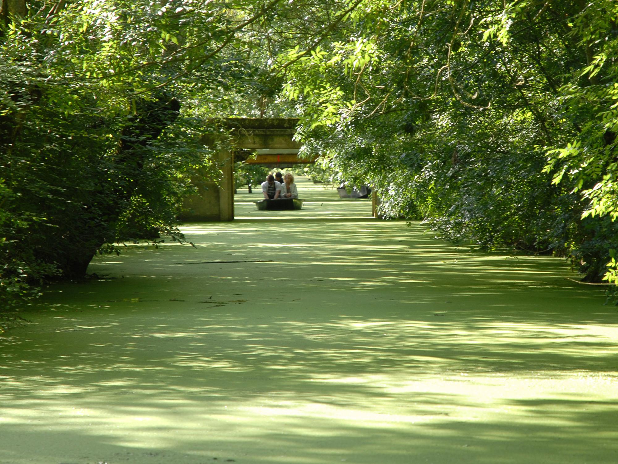 Walk in the marsh Poitevin in France