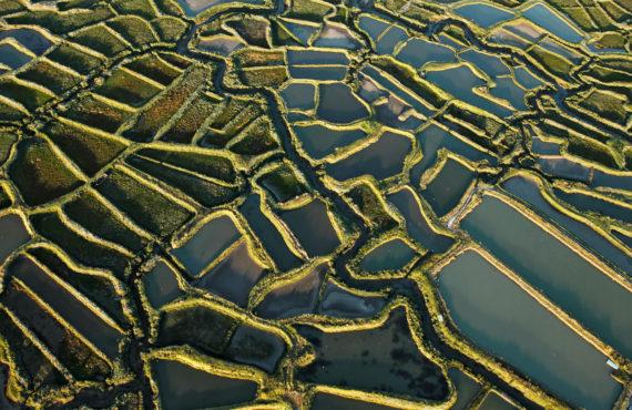 Photographie aérienne des Marais salants de la seudre sur la commune de la Tremblade, 17390, département de la Charente-Maritime (17), Région Poitou-charentes, France, Europe