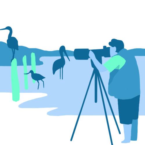 Illustration de l'observation des oiseaux dans la baie de l'aiguillon