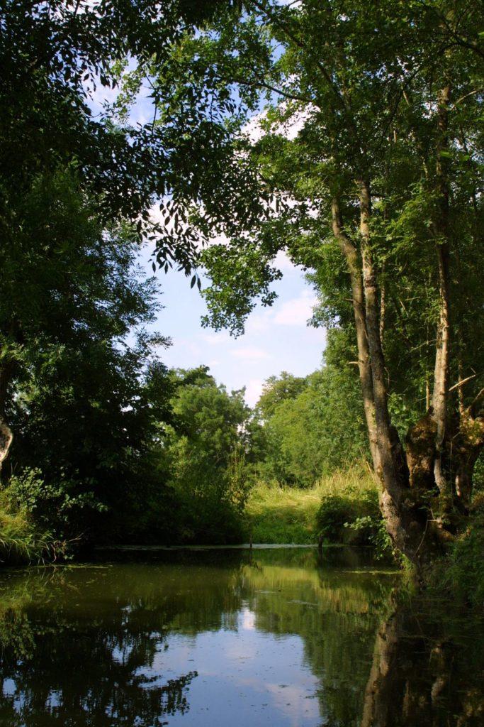 vegetation in the Marais Poitevin